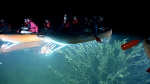 Valgupaat Veealuse Metsa Kohal Rummu